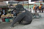 Junger Elefant. Elephant Kraal Pavillion, Ayutthaya