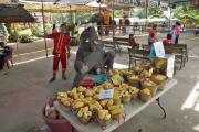 Junger Elefant (Elephas maximus indicus). Elephant Kraal Pavillion, Ayutthaya
