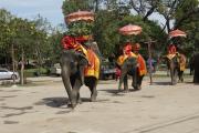 Elefanten (Elephas maximus indicus). Ayutthaya