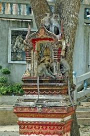Respektlose Javaneraffen (Macaca fascicularis). Tigerhöhlen-Tempel (Wat Tham Suea). Krabi