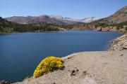 Ellery Lake, 2906 müM; Tioga Pass, CA