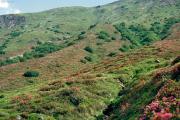 Zustand der Bergstrecke 1987
