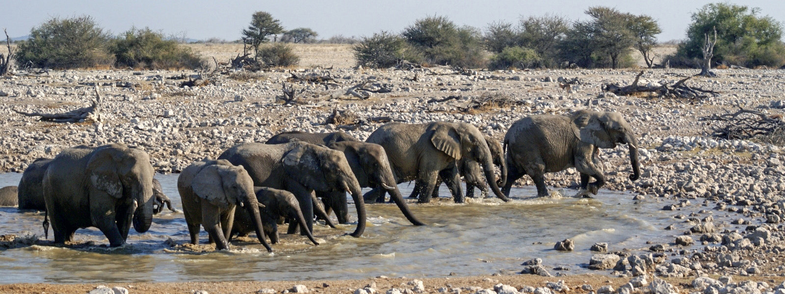 Namibia, Elefanten, Etosha