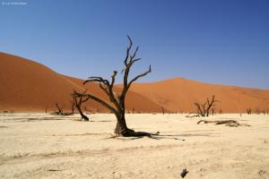 Abgestorbene Bäume im Dead Vlei. Sanddüne